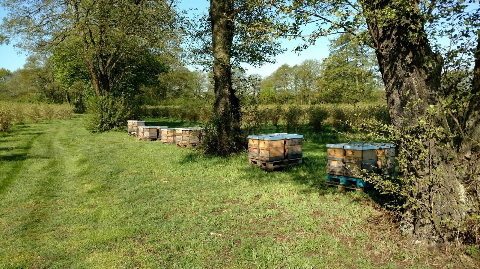 best ubung auf dem bickbeernhof bienenwerk bioland honig bioland imkerei. Black Bedroom Furniture Sets. Home Design Ideas