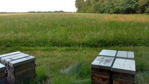 Bienenstand Rotklee