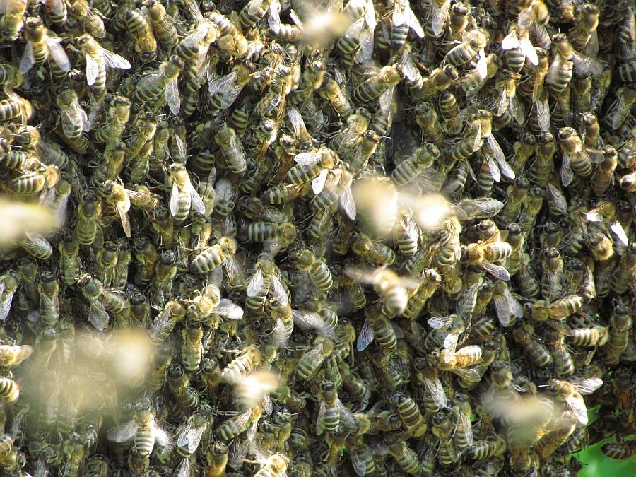 Die Bienen haben den Winter gut überstanden und sind schon eifrig am Sammeln & Bestäuben.