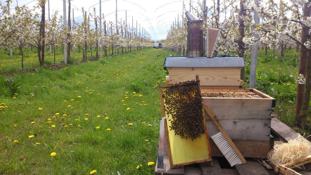 Bienenvölker im Alten Land