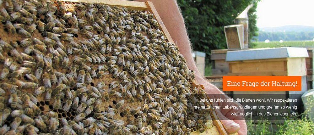 imkereiprodukte verarbeitung von honig pollen wachs co
