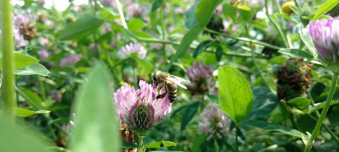 Gute Standorte, gesunder Honig